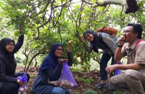 Jom, Melawat Ladang Epal di Malang Batu Surabaya